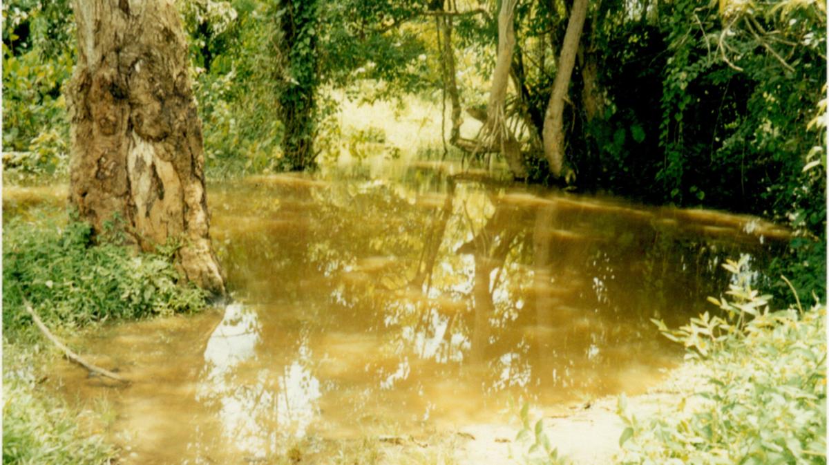 La rivière Pra