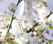 spring-Hero.jpg