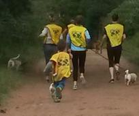 KZN Hillcrest dog walking