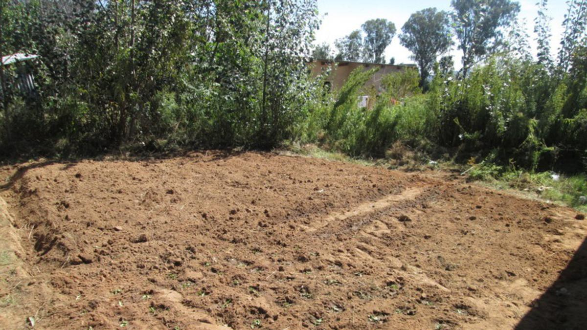 Puleng's newly planted garden