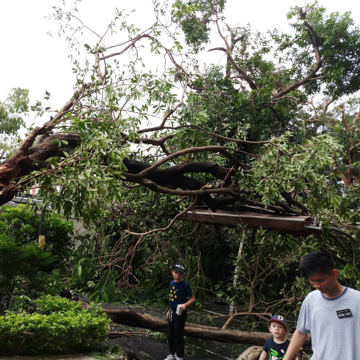 颱風山竹: 傳教士在全港提供服務5