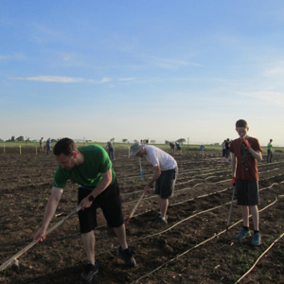Members of the Taber Stake plant the garden