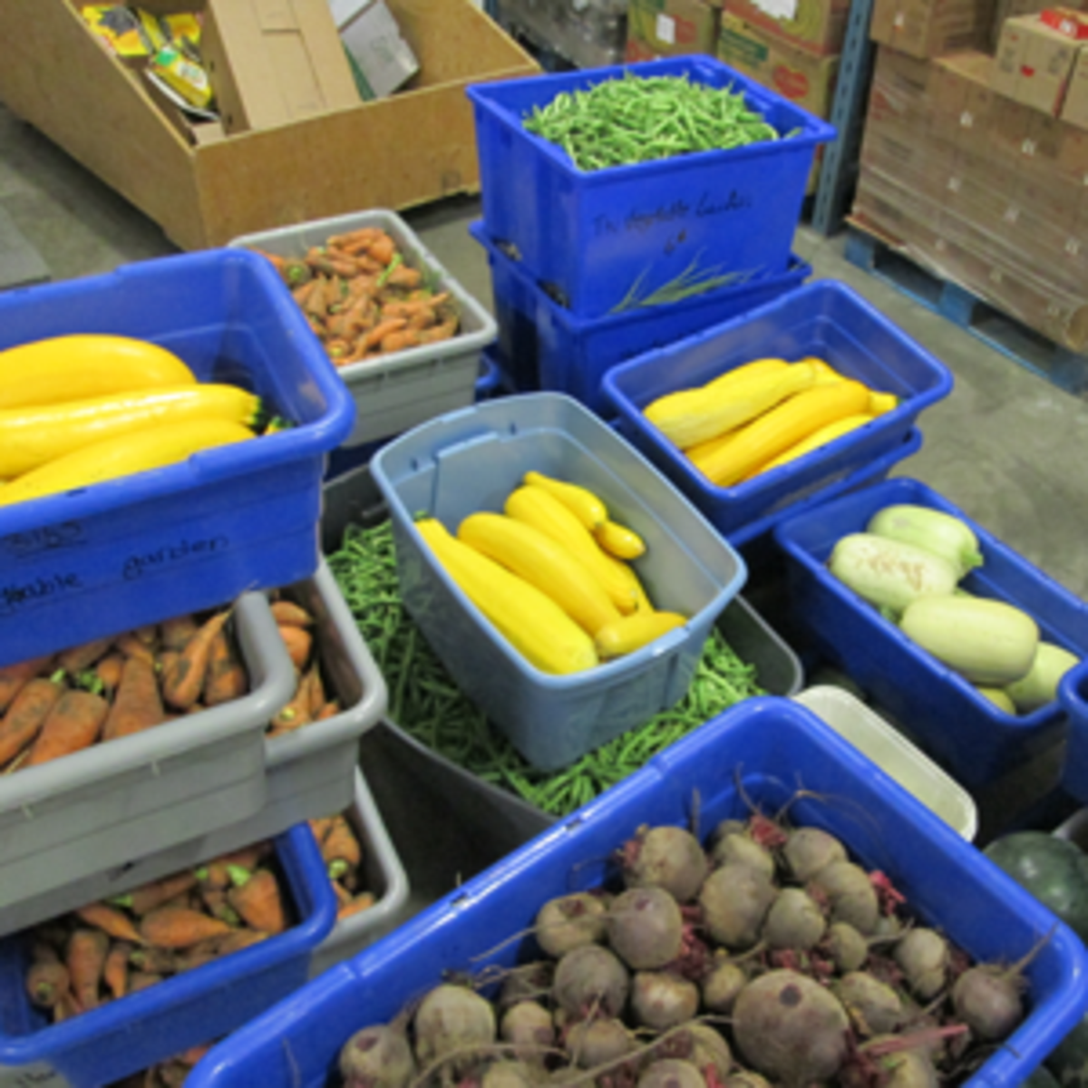 Produce ready for the food banks