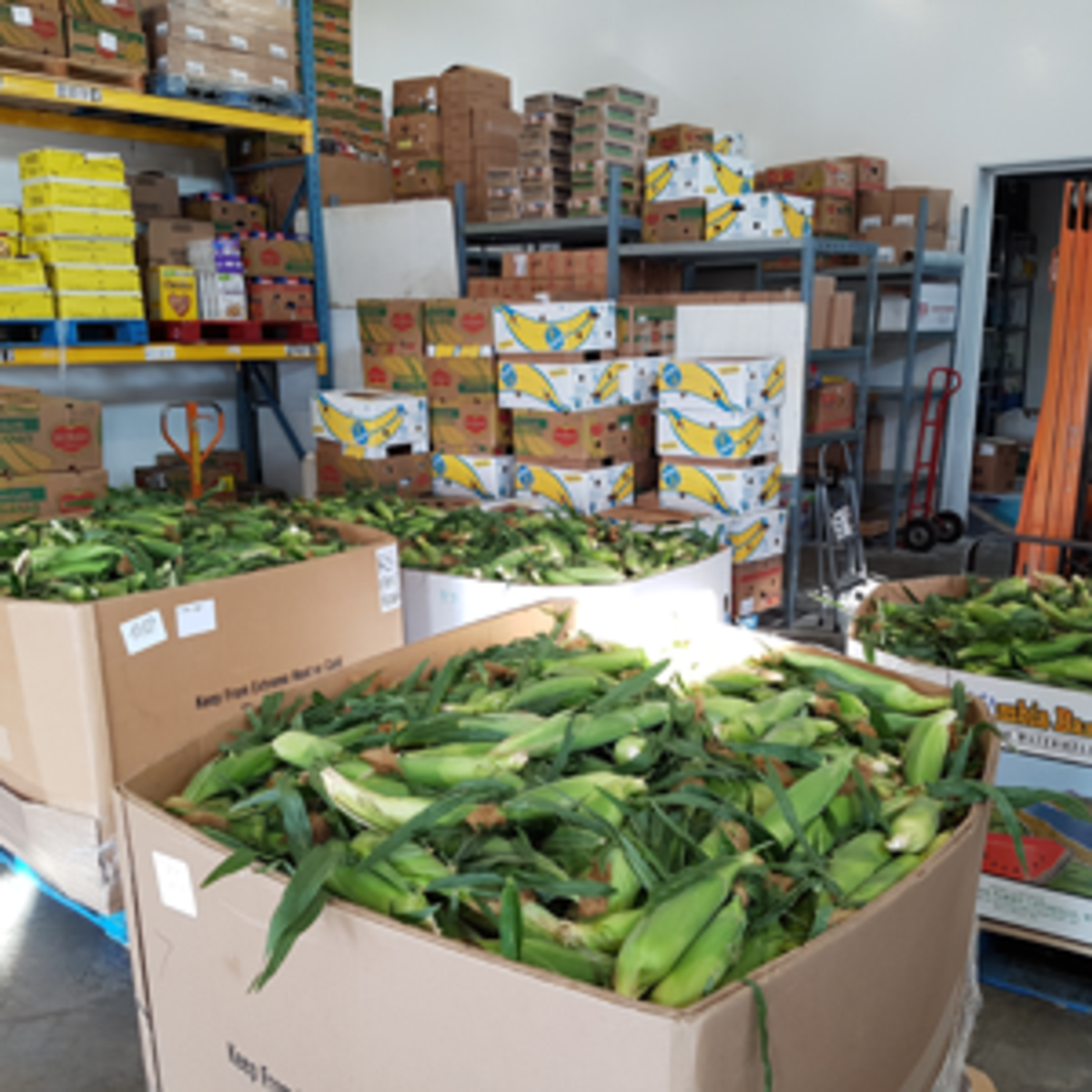 August produce ready for shippping
