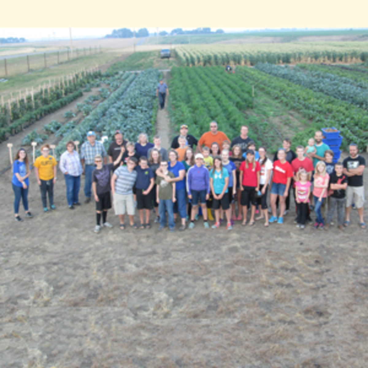 Ward volunteers for the Taber Stake vegetable garden
