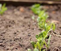 seedlings-900588-gallery.jpg