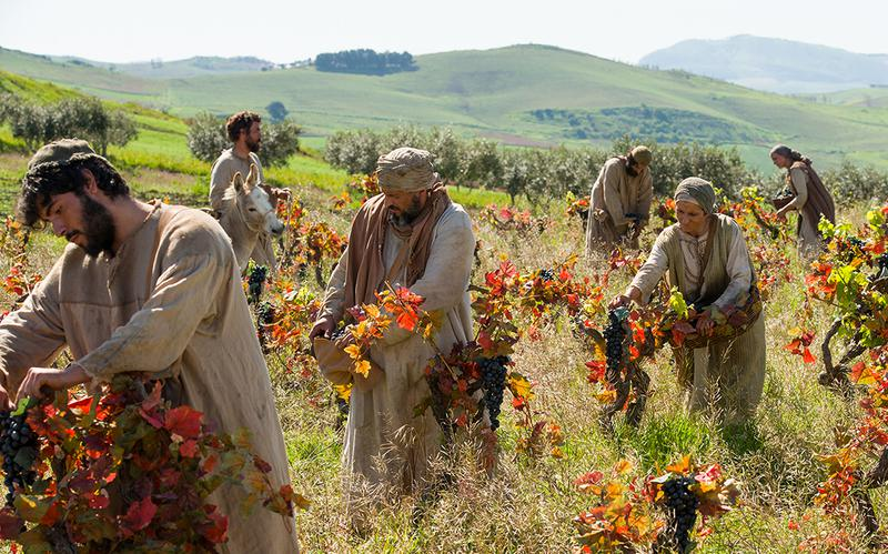 labourers-in-the-vineyard