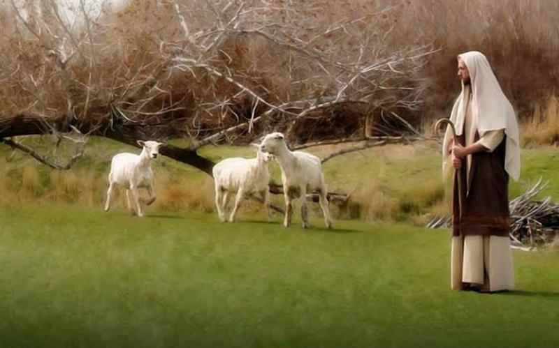 Jesus ist der wahre Hirte, der seine Schafe liebt. Ebenso wie er sollen wir uns umeinander kümmern.