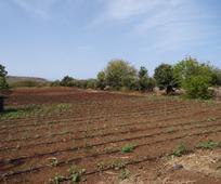 Sistema de irrigação gota-a-gota - (Foto: Fernanda Mascarenhas)