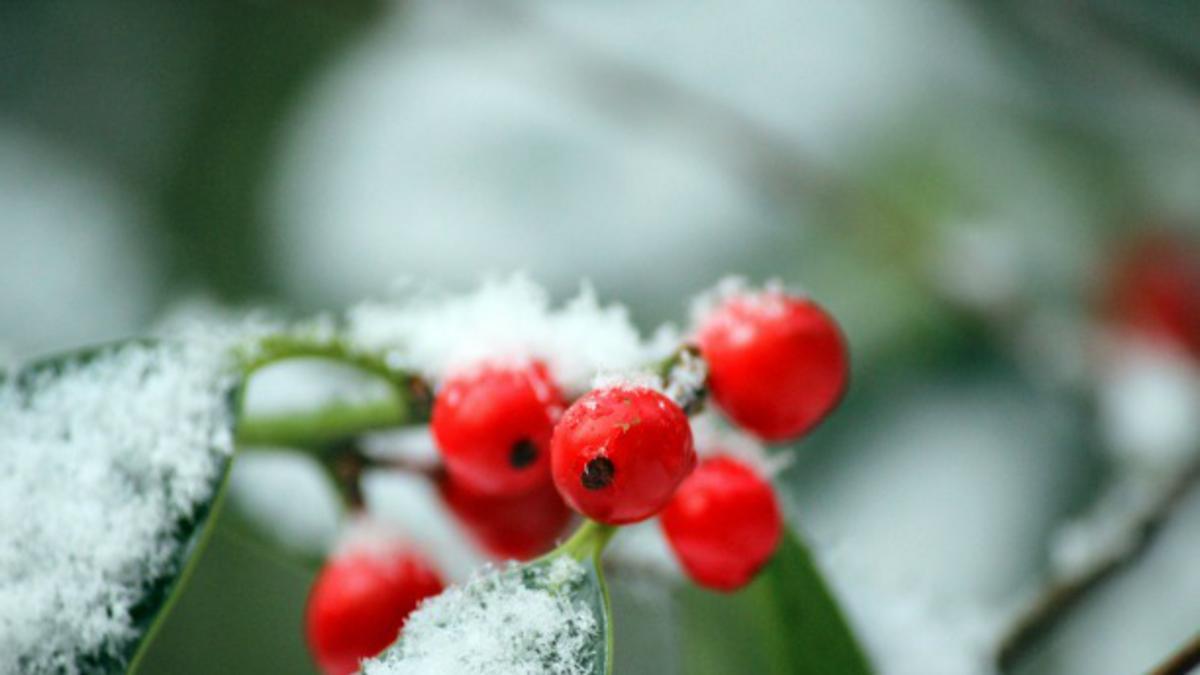 Дух Божића