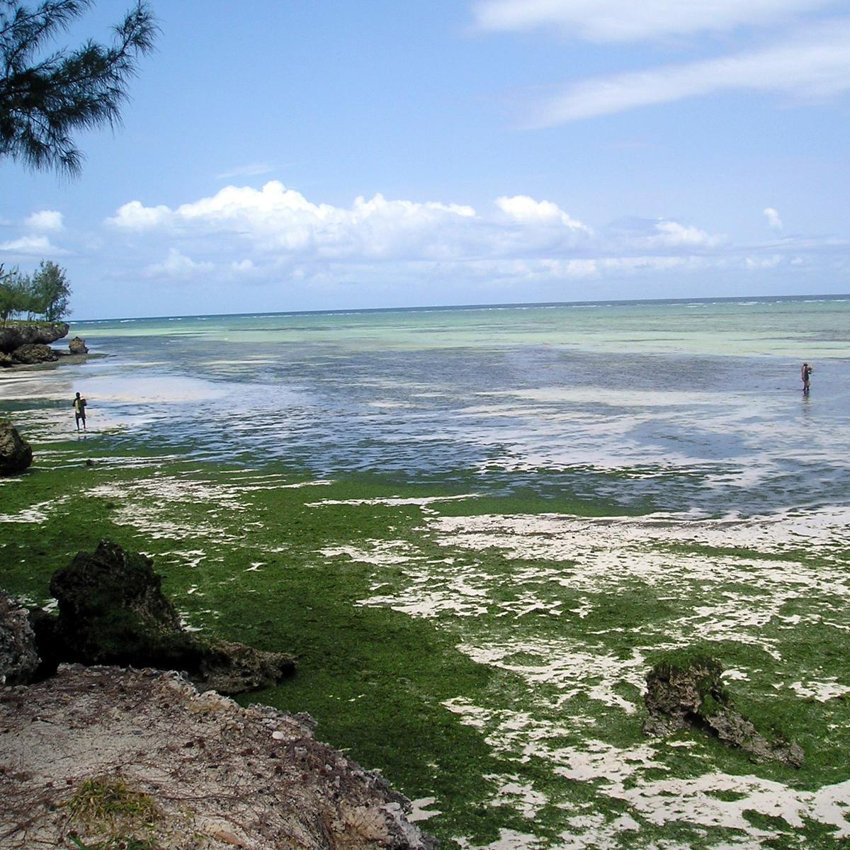 Zanzibar plaže