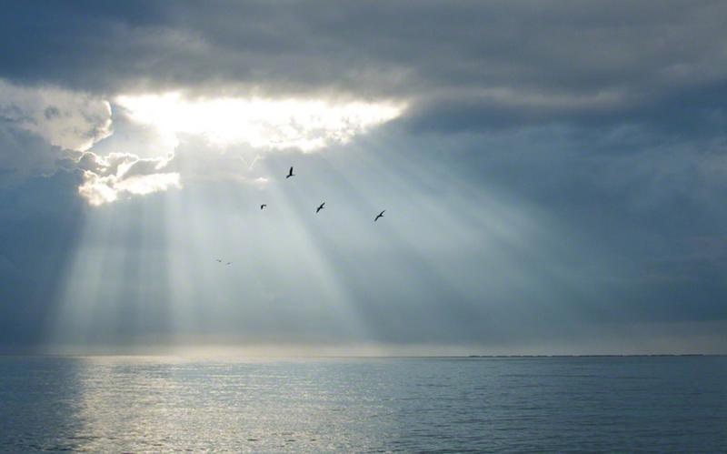 하늘을 날고 있는 새들의 모습