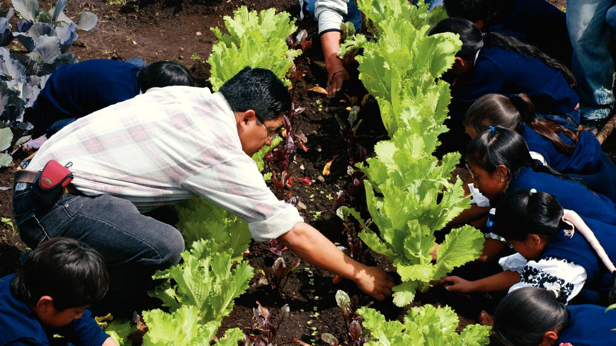 Cultivo de vegetales básicos